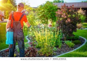 Insecticide - Pesticide